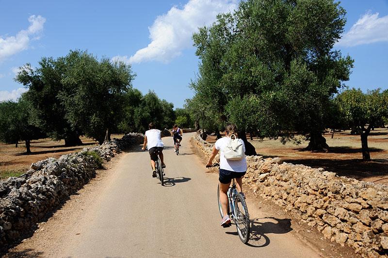Escursioni in bicicletta tenuta san procopio for Domo arreda facile porto degli ulivi