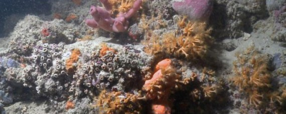 1552239436693.jpg--barriera_corallina_di_monopoli__la_proposta_della_regione___facciamone_un_area_protetta_